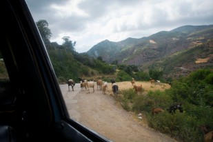 so yeah, we were stopped by herd of goats. they couldn't decide the direction so we spent few minutes in a car, waiting...