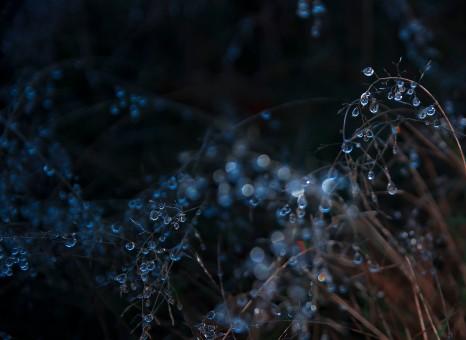 Frozen waterdrops at Richmond Park
