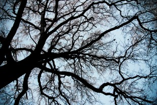 Look up! Richmond Park